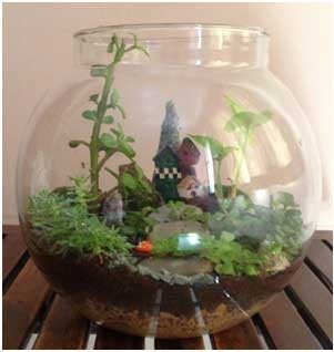 Diy do it yourself terrarium kit by your green canvas indiasanta do it yourself terrarium kit by your green canvas solutioingenieria Image collections